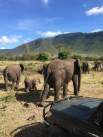 Добре дошли в Танзания! HAKUNA MATATA! ПУМБА сафари в саваната на ТАНЗАНИЯ със Серенгети и Нгоронгоро - индивидуални пътувания през цялата 2021 г., с възможност за ПОЧИВКА НА ОСТРОВ ЗАНЗИБАР!